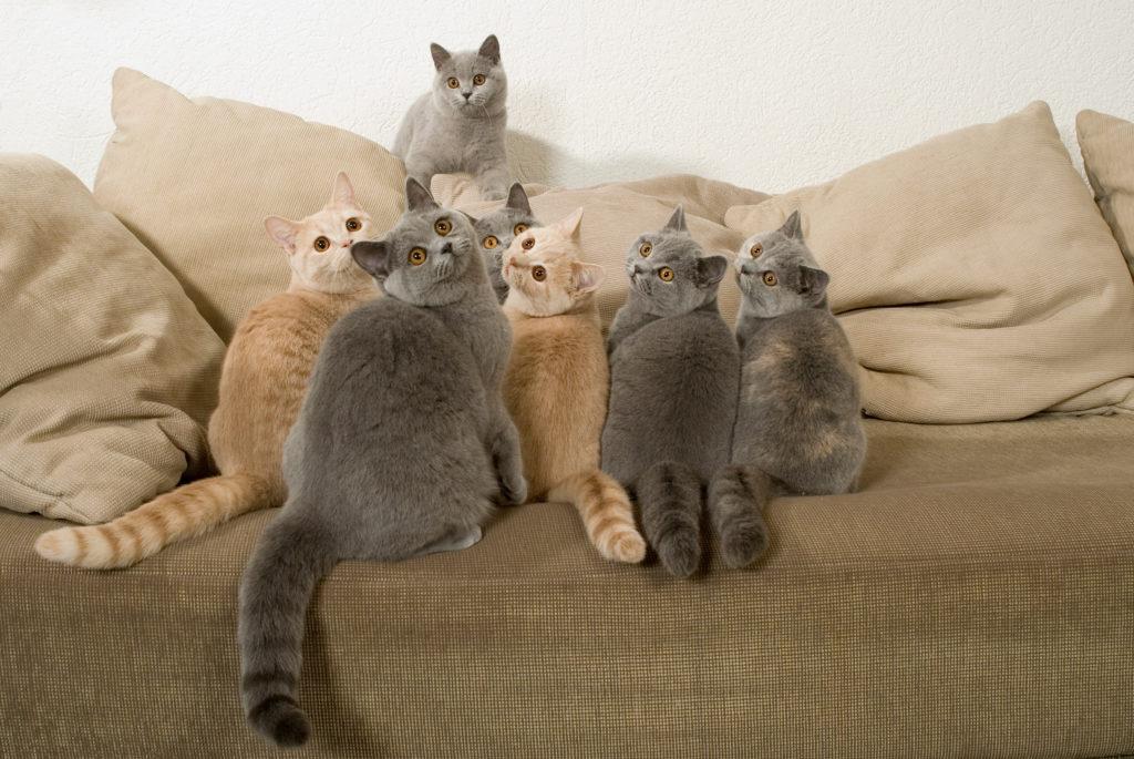 mehrkatzenhaushalt