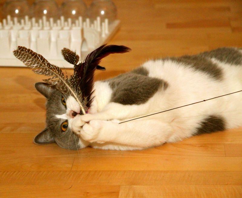 Katzenangel Bird mit Federn