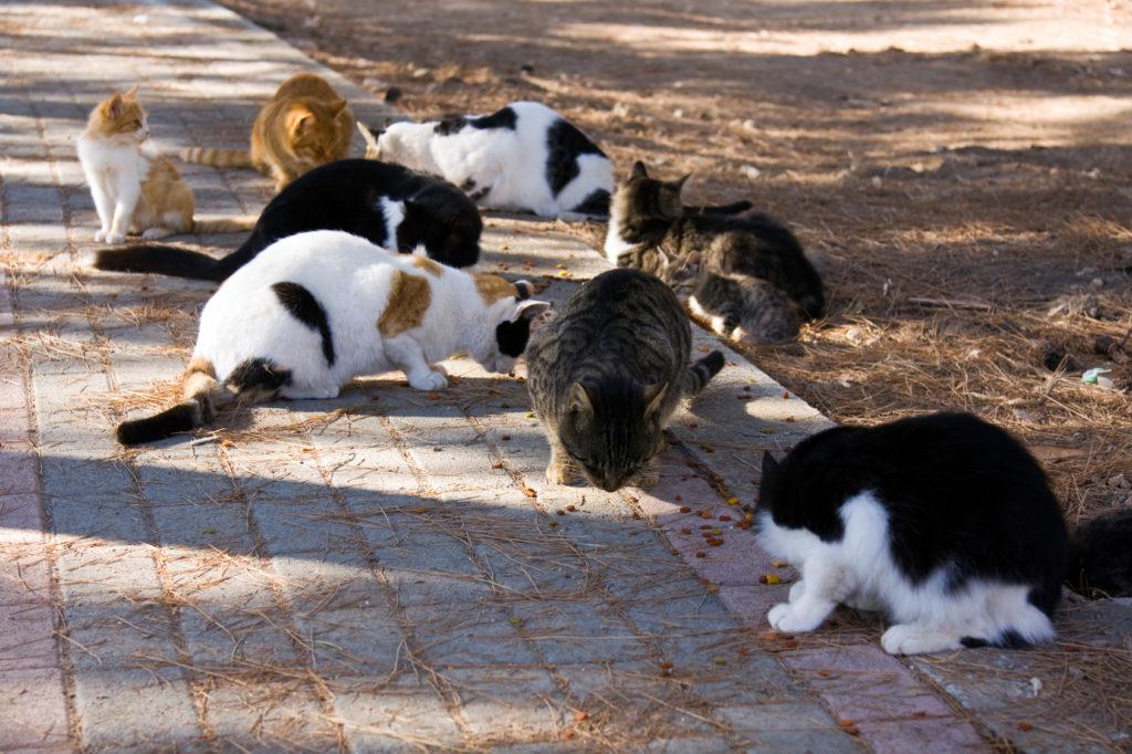 katzen vermehrung durch kastrieren verhindern