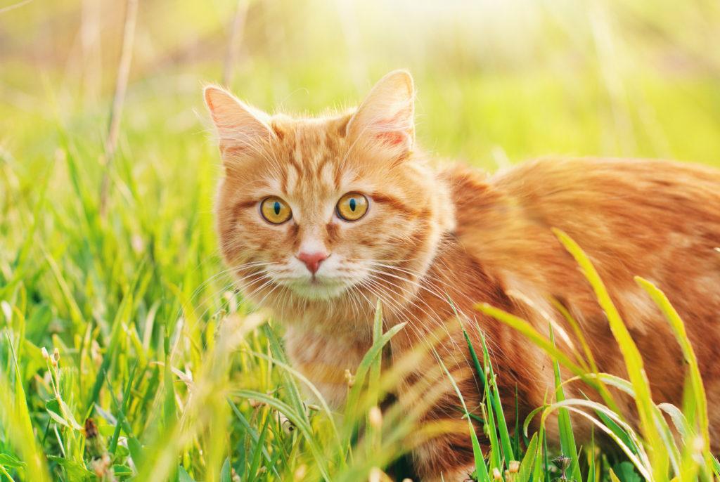 viselkedési kerti macska