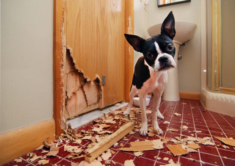 mit tegyünk ha a kutya szétrág mindent, kutya szétszed mindent, kutya szeparációs szonongás