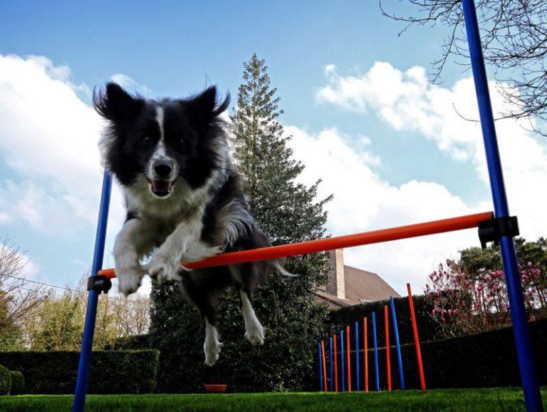 Agility - egy modern kutyasport