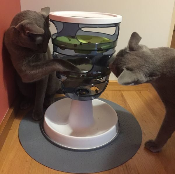 Intelligens játékok macskák számára