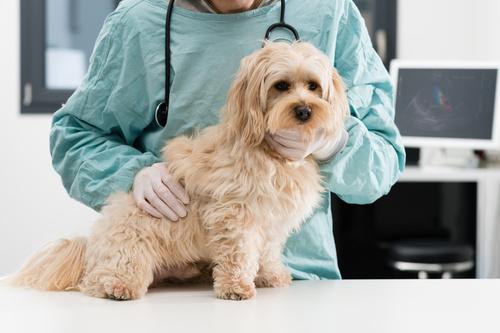 kutya láz, kutya lyme kór, kutya colibacillózis, kutya leptospirózis, kutya szalmonella