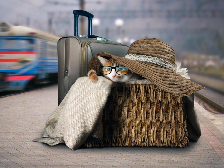 Macskával a vonaton
