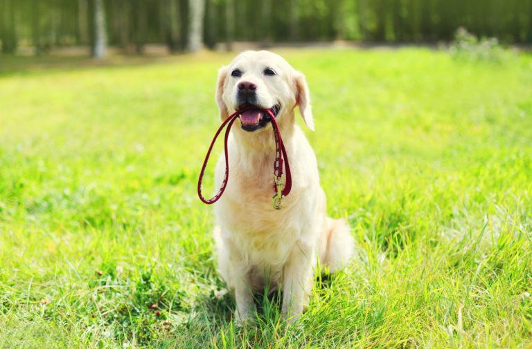 Legjobb Póráz Kutyáknak