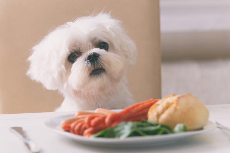 mit nem ehet a kutya, mit ehet a kutya