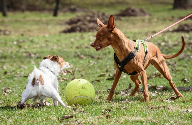 agresszív kutya kezelése, harapós kutya, morog a kutya, harap a kutya