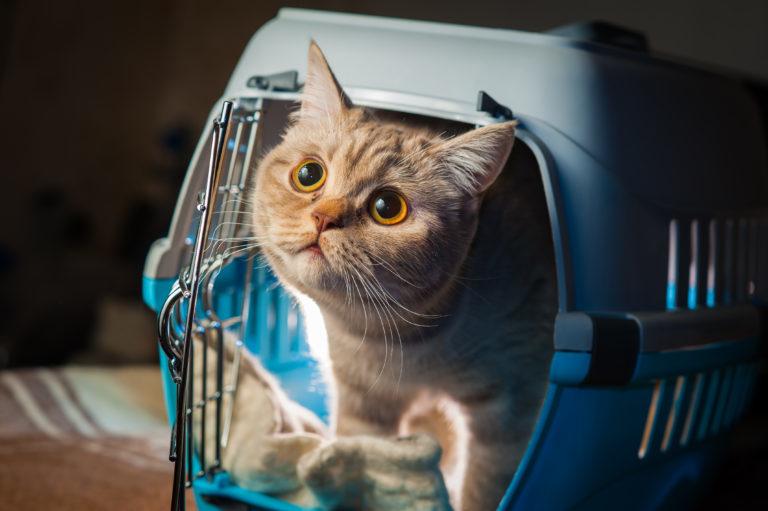 Utazás macskával
