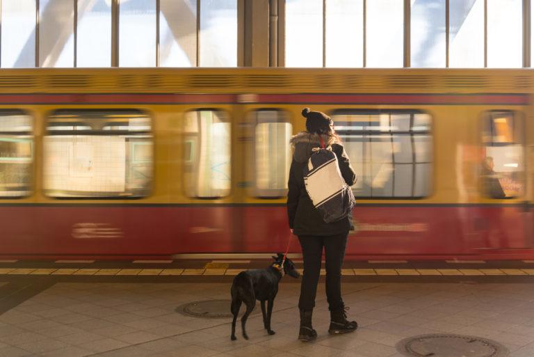 Vonatozás kutyával