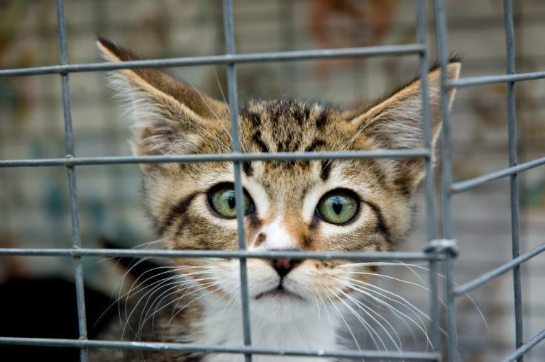 Hol lehet macskát vásárolni