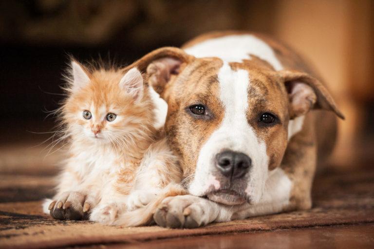 kutya macska összeszoktatása, kutya macska összeszoktatás, kutya és macska összeszoktatása, kutya macska egy lakásban