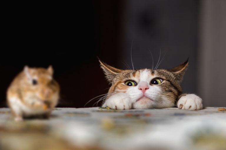 Amikor a macskák vadásznak