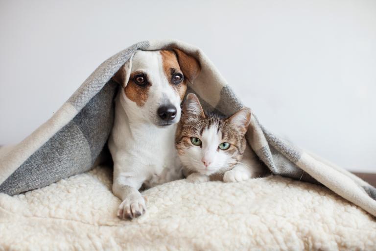Kasztrálás kedvelésből tartott macskáknál - Ivartalanítás vagy nem ivartalanítás