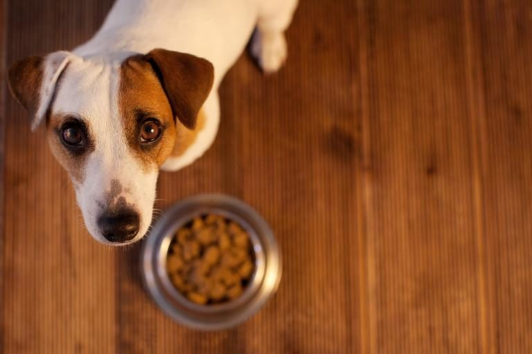 Hipoallergén kutyatáp allergiás kutyáknak