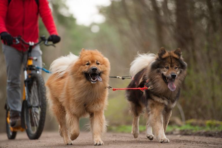 biciklizés kutyával