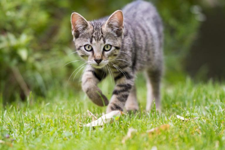 macskabiztos kerítés, macska kerítés. cica kifutó