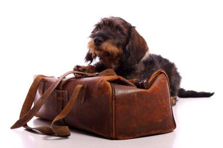 Kutyák utazási betegsége