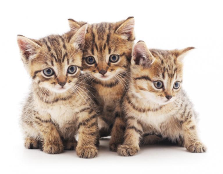 cica nevek, macska nevek, macskanevek, cicanevek