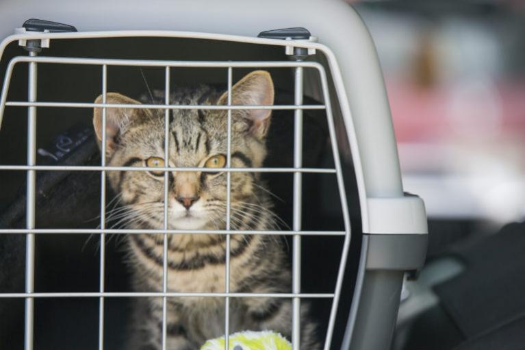 Autós utazás macskával