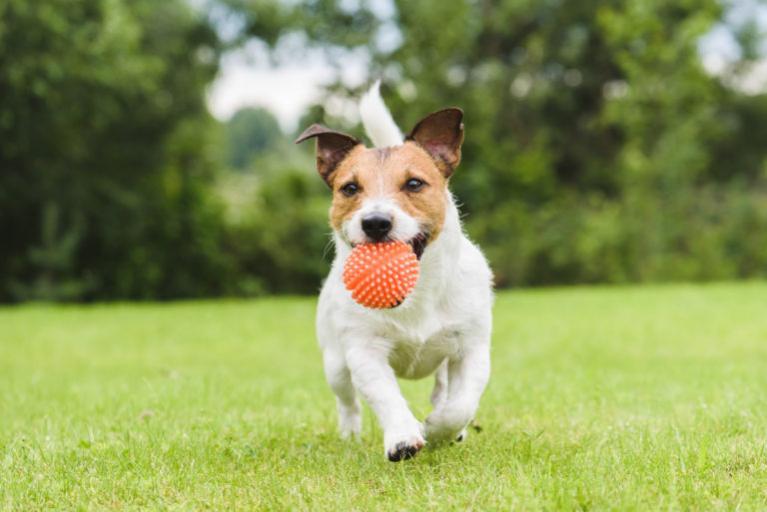 Hogyan játszon megfelelően kutyájával