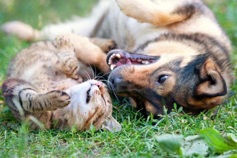 Kutyatartók kontra macskatartók