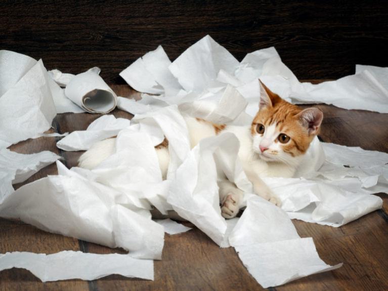 Mi a teendő, ha a macska nem szobatiszta