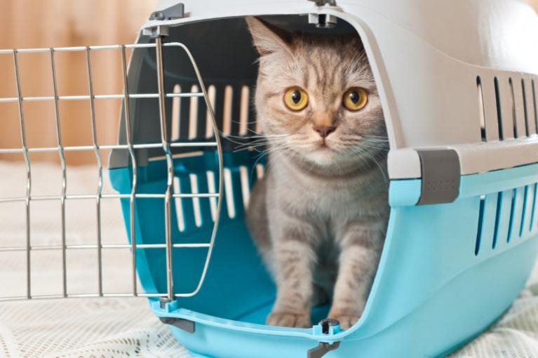 Hajózás macskával