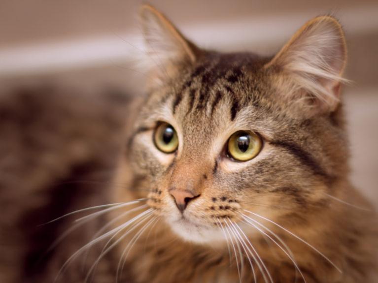 macska kommunikáció, macska kommunikációja