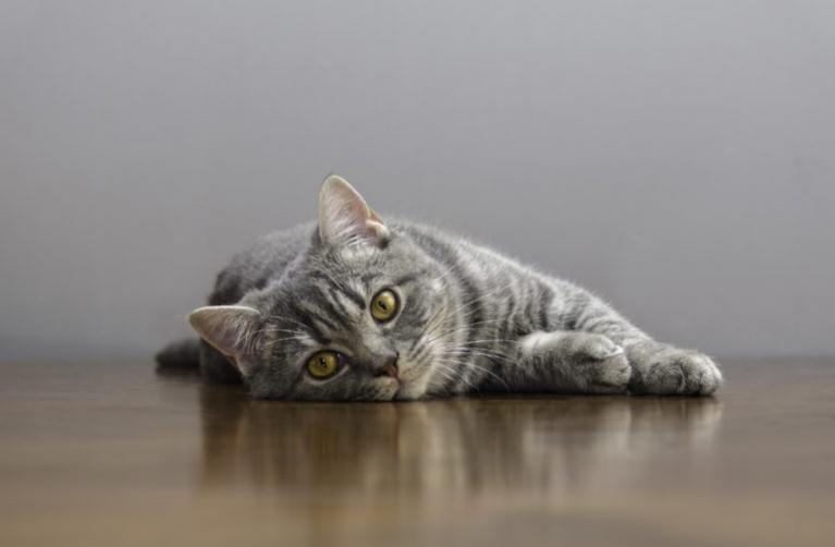 macska tüzelés, tüzel a macska, macska tüzel, tüzelő macska,