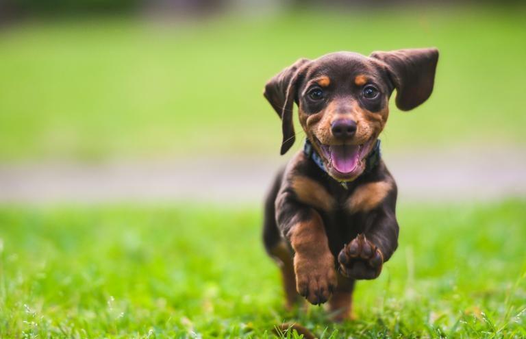 megfelel kölyök és felnőtt kutya