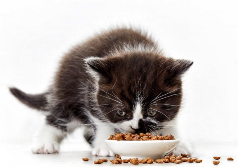 kiscica etetése, kismacska etetése, kiscicák etetése, kiscica táplálása