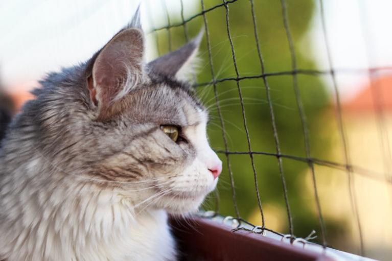 Macskaháló