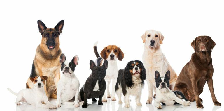 fajtaspecifikus kutyatáp