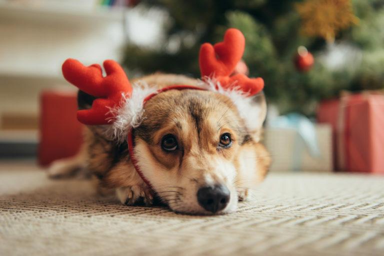 Karácsony kutyával