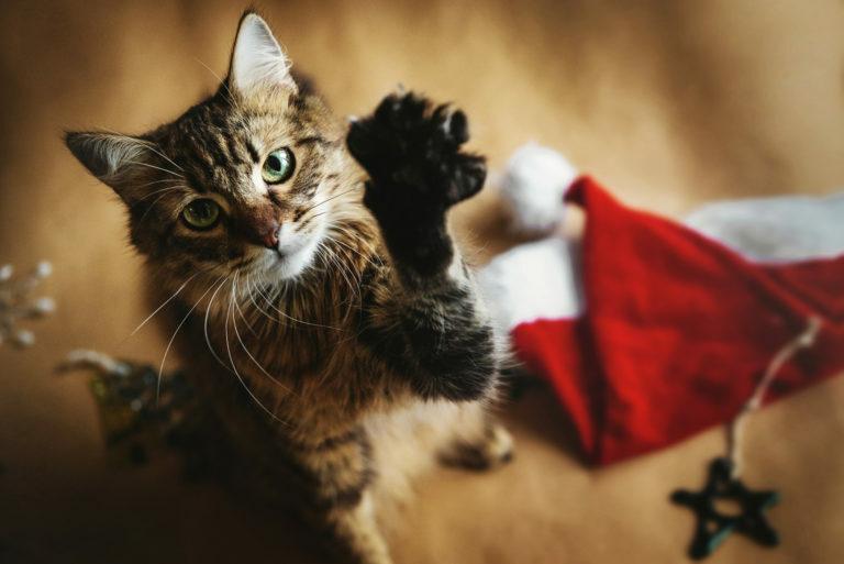 Karácsony macskával Tippek a biztonságos ünnepléshez
