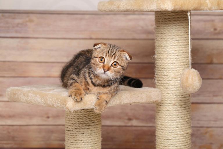 A megfelelő kaparófa, macskabútor