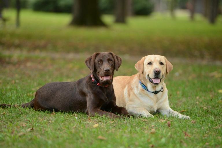 vakcina giardia kutyák mellékhatásai)