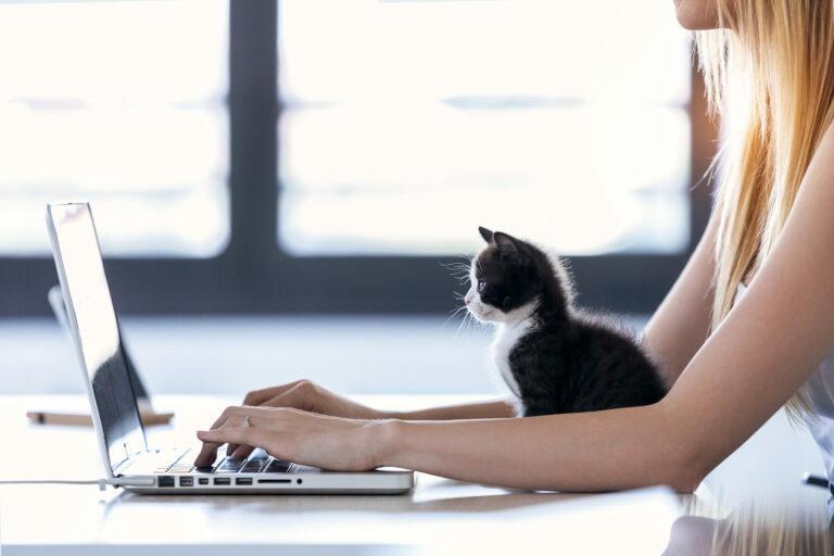 home ffice macskával, macskával otthonról dolgozni