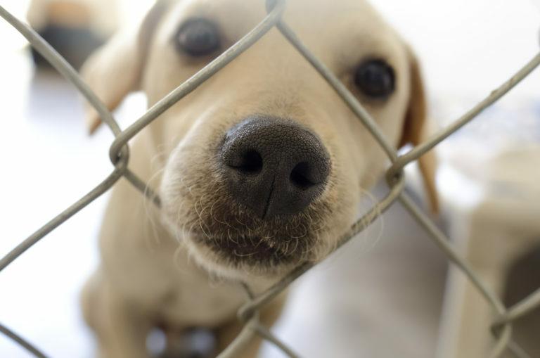 kutya örökbefogadás, menhelyi kutyák, örökbefogadható kistestű kutyák