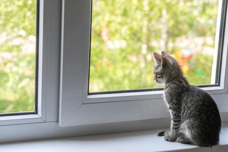 koronavírus macska