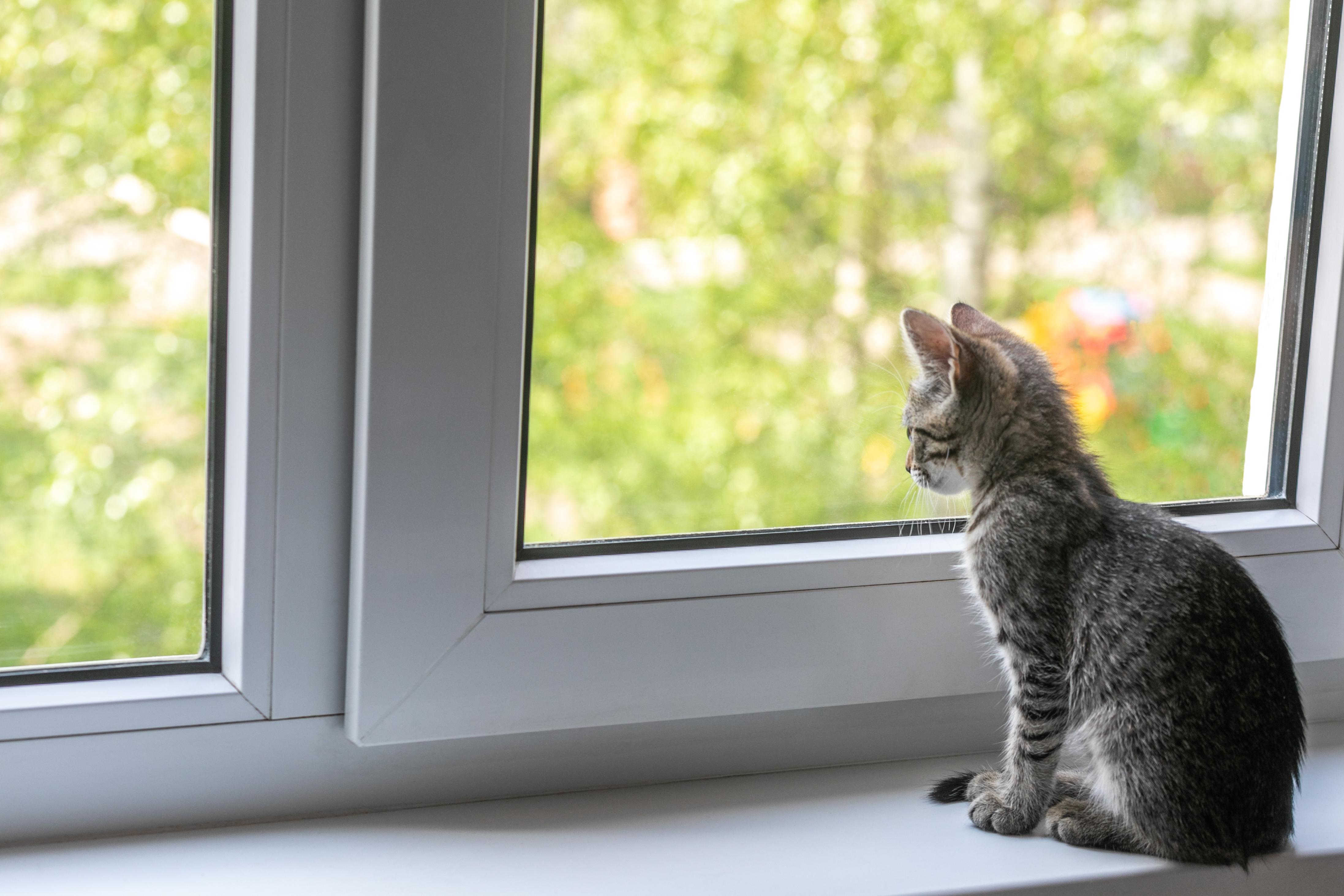 fogyás macska)