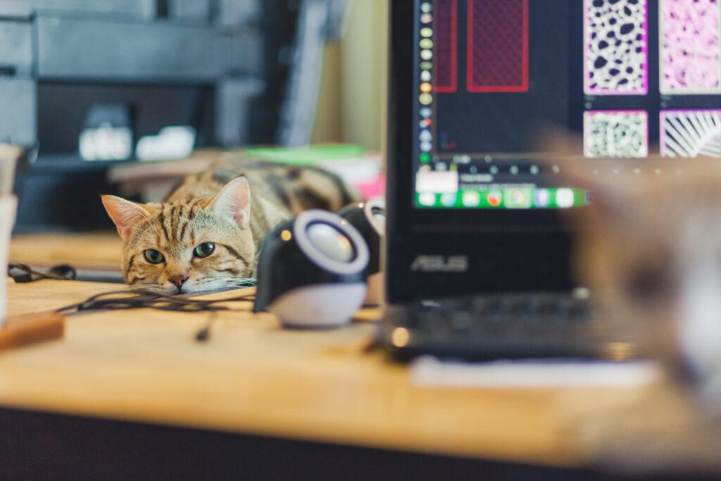 mit katze zu hause arbeiten