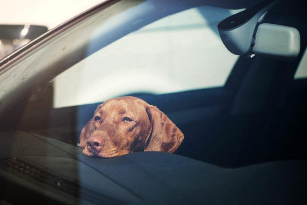 autóba zárt kutya