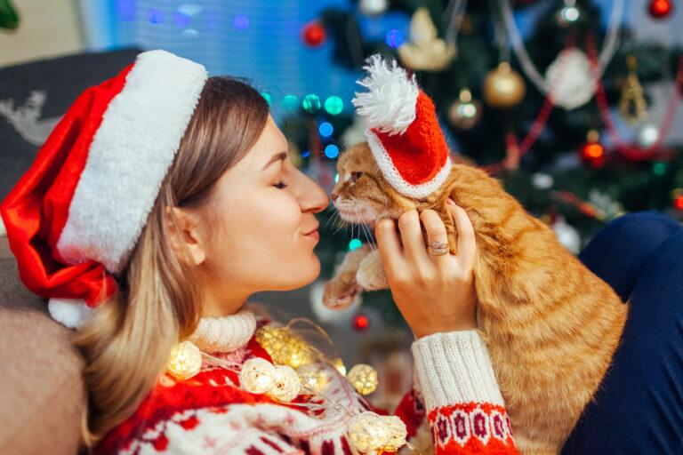 karácsonyi ajándék macskáknak