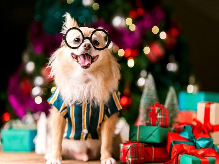karácsonyi ajándék kutyáknak