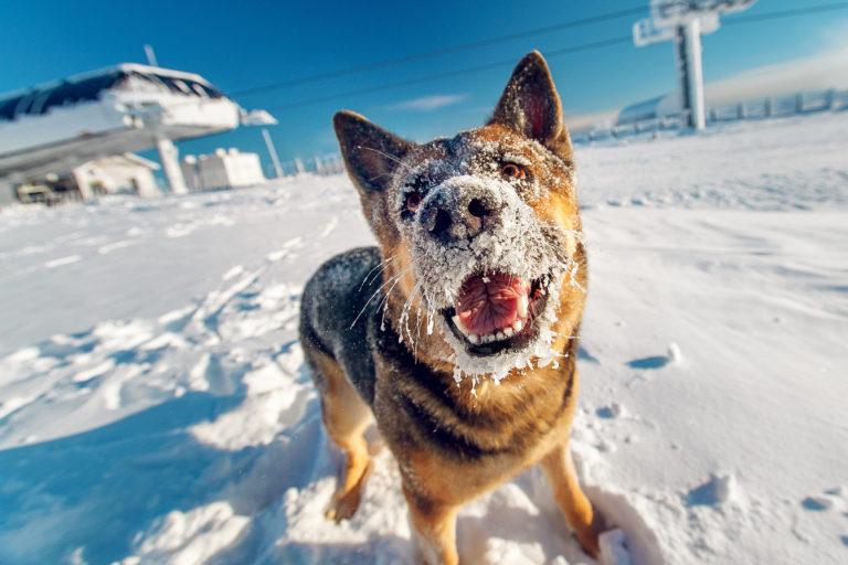 kutya télen