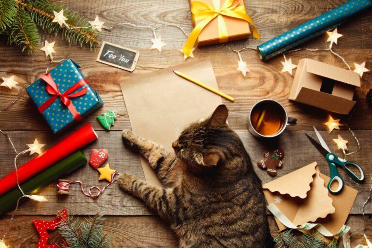 adventi naptár macskáknak házilag