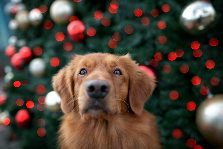 adventi naptár kutyáknak házilag