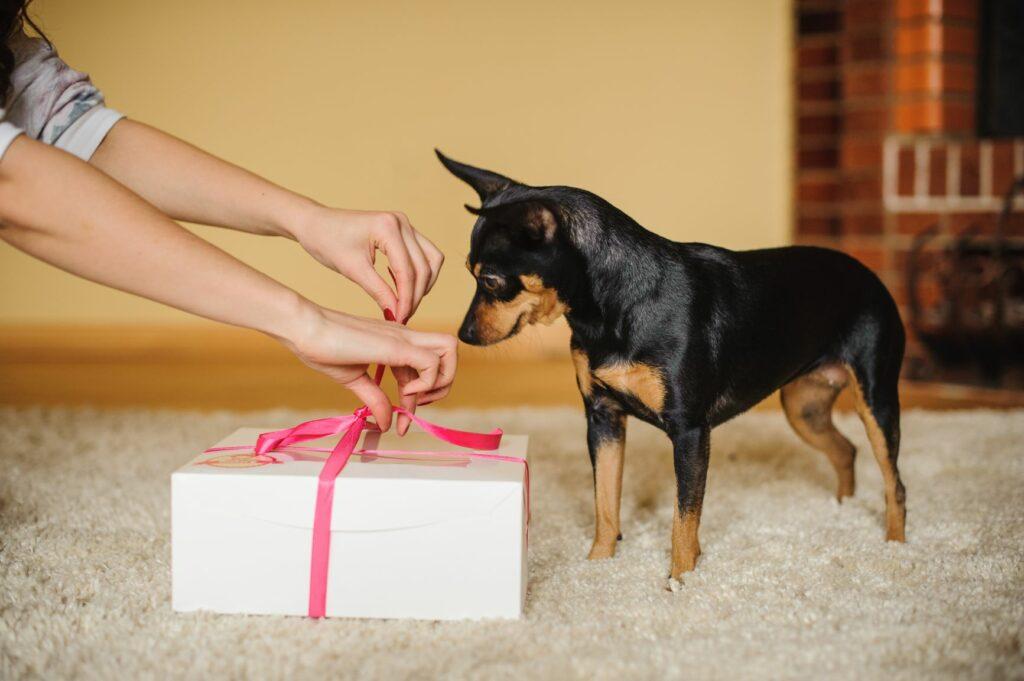 ajándék kutyának